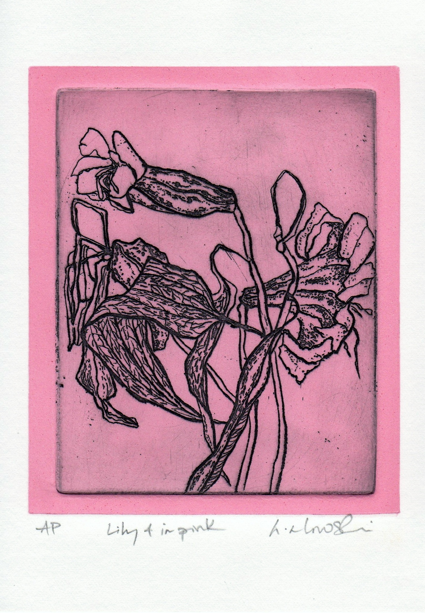 Lilly-4-in-pink_-intaglio-and-relief-colour-limited-edition, by the artist Helena Orlowski