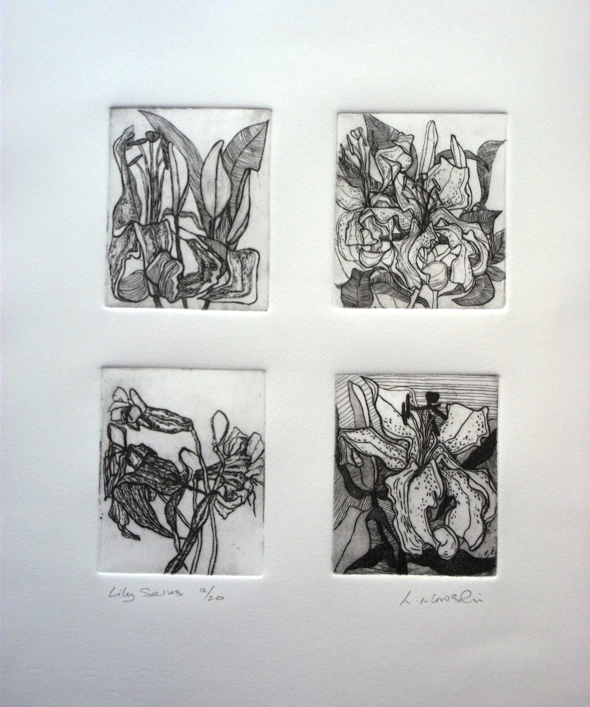 Lily-Series-etching-255-x-220, by the artist Helena Orlowski