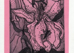 Lilly-2-in-pink-intaglio-and-relief-colour-limited-edition